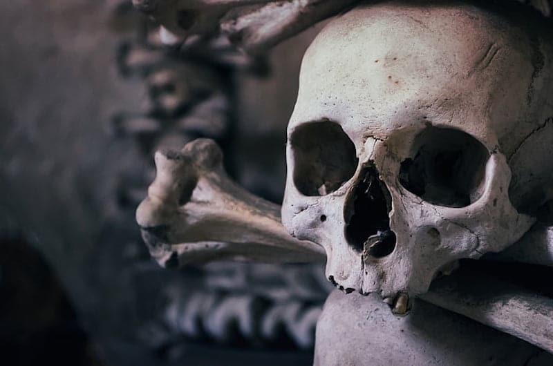 skull-ossuary luek